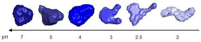 sec2_fig2_bovine_serum_albinum_shape_change.large.jpg