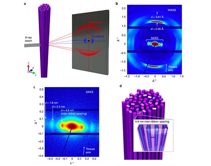 Self-assembly Nanoribbons SAXS WAXS